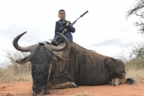 Alex Veturi Blue wildebeest